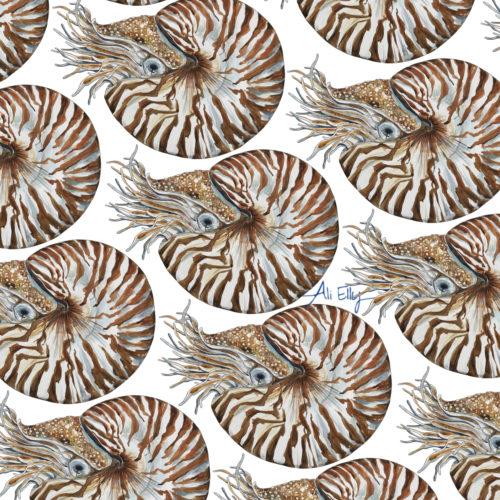 Day 12/100 Chambered Nautilus (Nautilus pompilius)