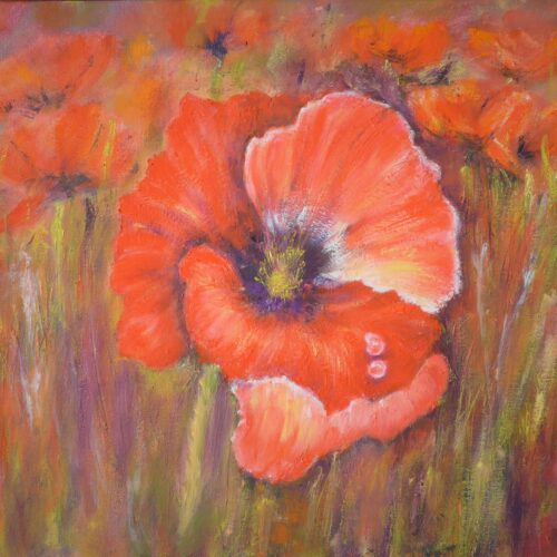 Tears on a Poppy
