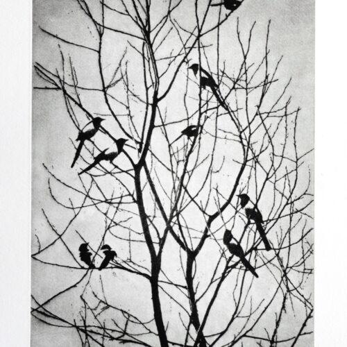 039-magpies_50_90